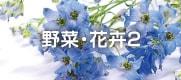 野菜・花卉2